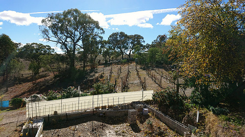 view of trees and rows of grapes for wine out the back of Orange.